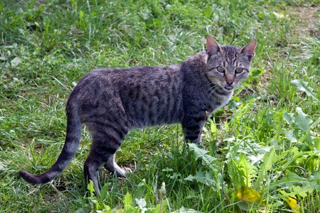 rnanimal: cat on a background of a green grass