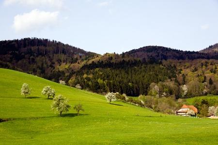 Landscape in the Black-forest, Germany ,Glottertal