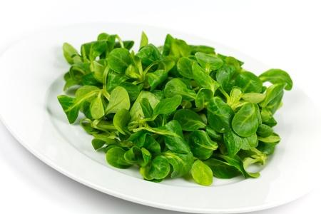 mache ,Valerianella locusta,corn salad,lamb's lettuce Stock Photo - 11782786