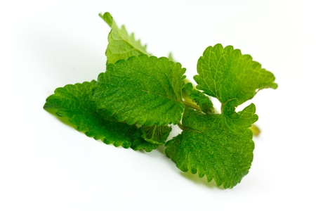 lemon balm: Lemon Balm  Stock Photo