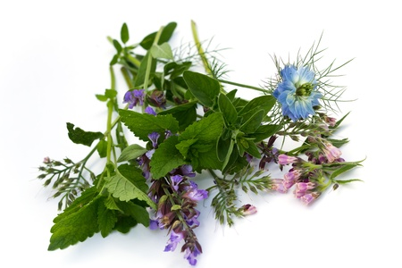 nigella seeds: mixed herbs, fennel flower,thyme,mint,borage,isolated on white