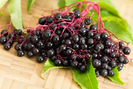 stilllife: Autumn Still-Life with ripe black Elder Berries