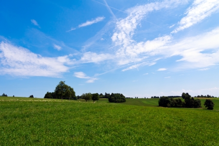 Landscape - lonely  trees on green field photo