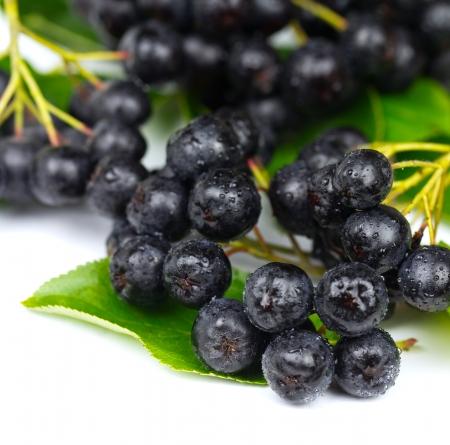 Chokeberry  Aronia   Fruit on the white Background Stock Photo