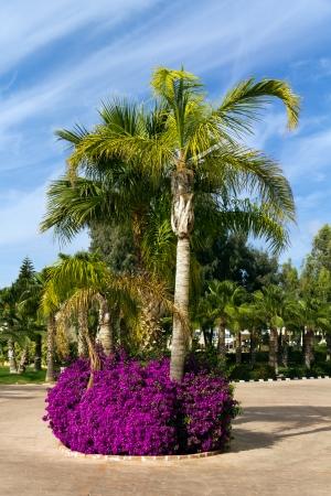 palm garden: Palm Garden with Flowers