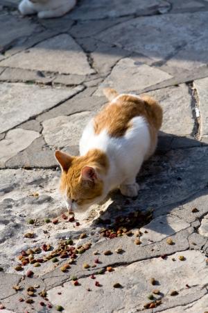 gato naranja: Gato naranja