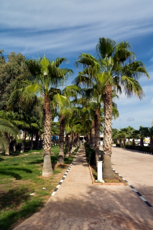 palm garden: Palm Garden on the Beach