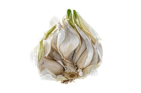 Opened bud of garlic - isolated on white Stock Photo