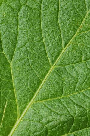 Green leaf close-up background