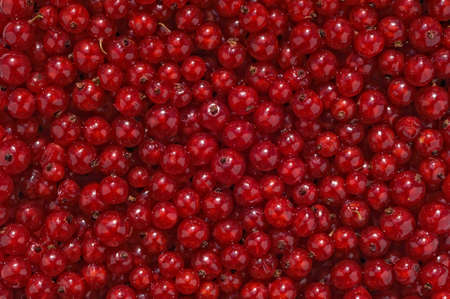 Red Currants - background Stock Photo