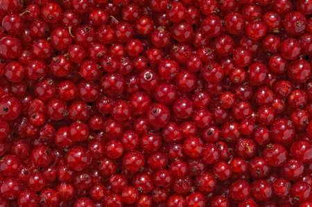 Rode aalbessen - achtergrond