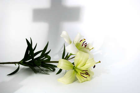 White lily on white with shadow of cross
