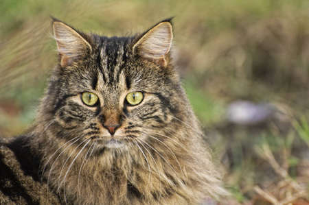portarit: Aware Tabby Cat  in gass - head and shoulders portarit Stock Photo