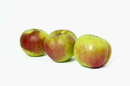 Three home grown (not supermarket) Bramley apples - from Nottinghamshire. Stock Photo - 10602129