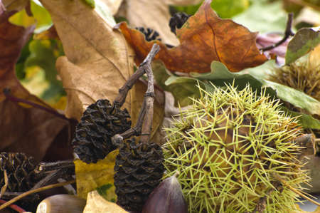 A variety of leaves and animal foods for the autumn season.