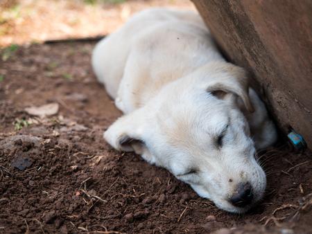 cansancio: El sueño del perro en el suelo frío. Foto de archivo