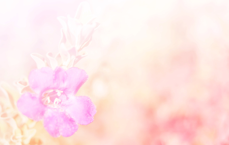 Abstract Blurry of Flower and colorful background. Beautiful flowers made with colorful filters. Stock Photo