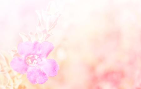 campo de flores: Resumen borroso de la flor y de colores de fondo. Hermosas flores hechas con filtros de colores. Foto de archivo