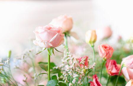 Close up pink rose in wedding background. Stok Fotoğraf