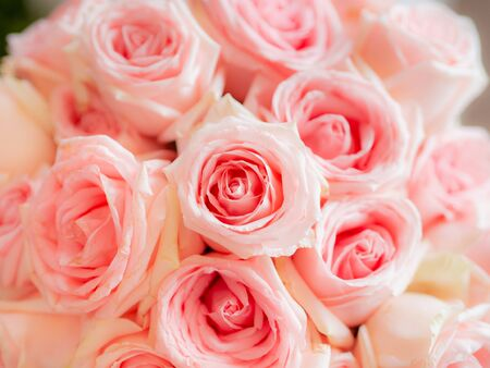 Top view Close up pink rose in wedding love abstract background.
