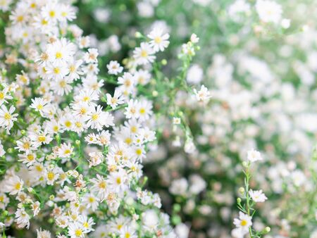 Close up white and yellow flowers on blur green background in wedding.