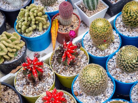 Top view Many cactus plants on the pot at cactus farm house background.