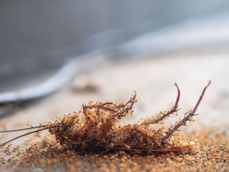Cockroaches die on the ground and have ants to eat as food of it background.