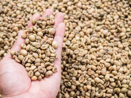 Close up raw coffee bean organic pile on hand nature background. Stok Fotoğraf