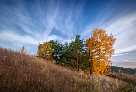group of autumn tree on a hill slope at the evening