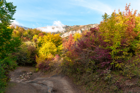 Beautiful colourful autumn landscape in mountains with countryside road