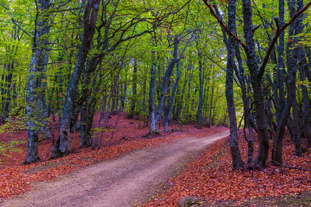 walk path: Beautiful countryside mountain road in autumn forest