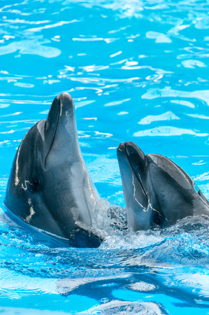 unify: Pair of dolphins dancing in light-blue water