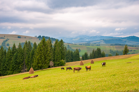 screen savers: cows on green meadow, with mountains and clouds in background. Stock Photo