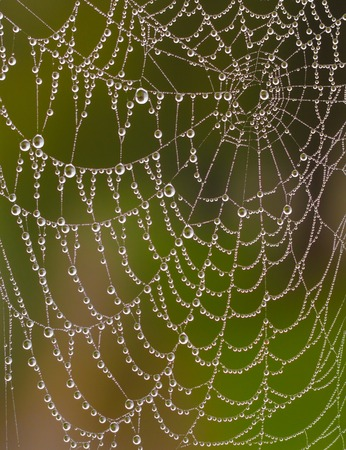 spider net: Wet spider web in the rainy weather