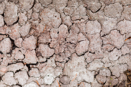 sickly: TextureBackground of cracked dry bark in the forest