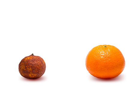 genetically: Two genetically modified oranges on white background.  Spoiled food