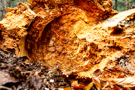 Close up shooting of trees trunk in cut