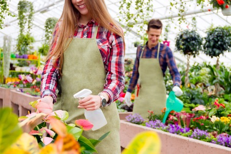 Florists couple at work. Girl sprinkling flowers in the pot in foreground and the guy watering plants in the background. Stock Photo