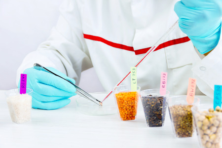 Scientist testing gmo plants and seeds in biological laboratory