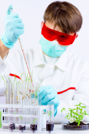 Environmental sciences. Scientist injecting gmo plants located in the glass flasks in the laboratory