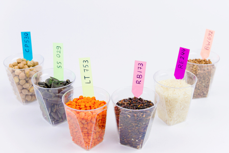 Ecologically clean products. Gmo grain and seeds located in the glass cups isolated on the white background