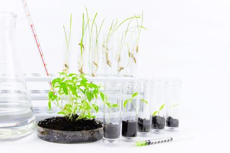 Environmental sciences. Gmo plants located in the glass flasks and injectors isolated on white background