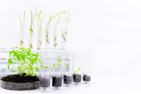 Environmental sciences. Gmo plants located in the glass flasks isolated on white background Stock Photo