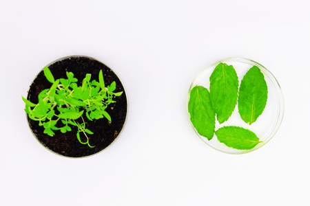 Environmental sciences. Top view of gmo plants located in the glassware isolated on white background Stock Photo