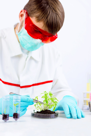Environmental sciences. Scientist testing gmo plant with tongs in laboratory Stock Photo