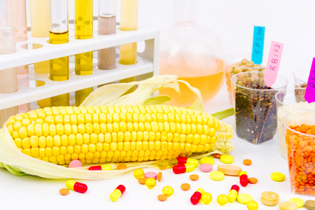 Ecologically clean products. Gmo seeds located in the glass cups, glass tubes with colorful liquid, corn and tabletes isolated on white background