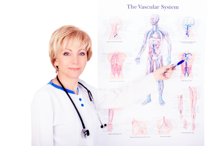 Smiling doctor wearing a stethoscope pointing at the vascular system poster. 스톡 콘텐츠