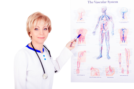 Smiling doctor wearing a stethoscope pointing at the vascular system poster. Stockfoto