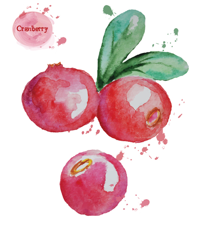 Hand drawn watercolor cranberry isolated on white background. Vector illustration