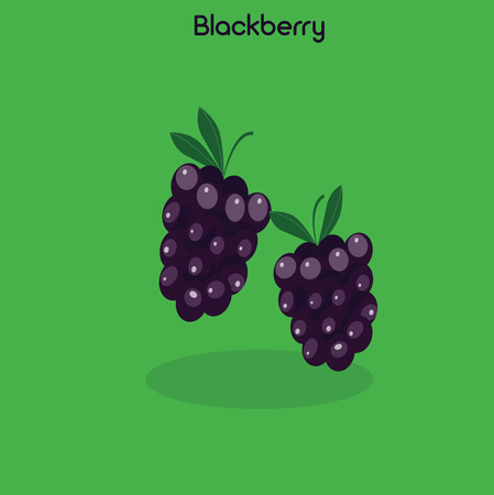 dewberry: Colorful blackberry icon isolated on green background. Vector illustration Illustration